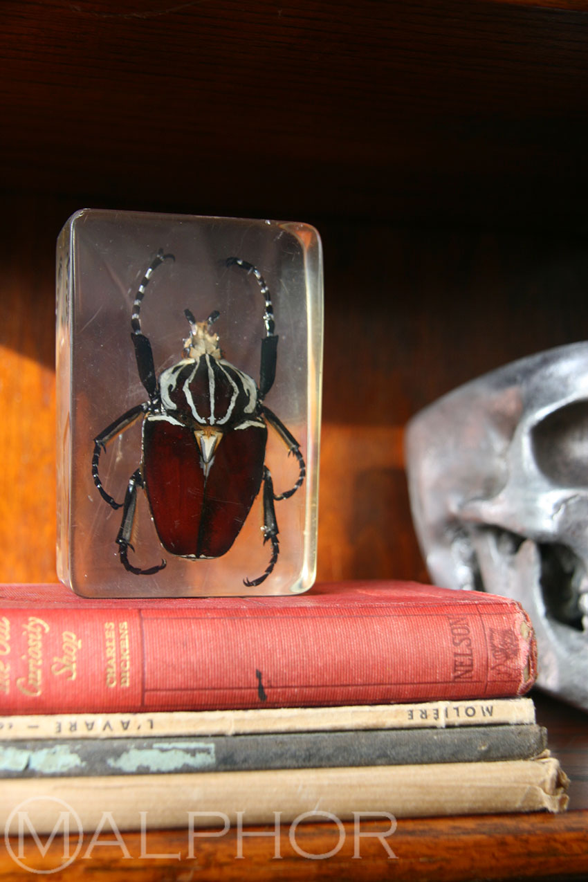 Beetle Paperweight